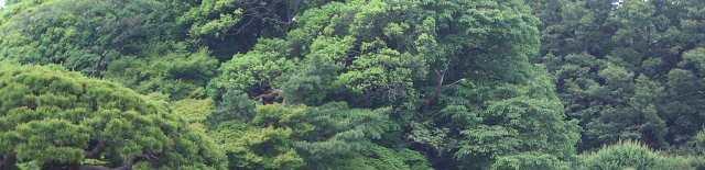 shinjuku_gyoen-japanese-garden.JPG